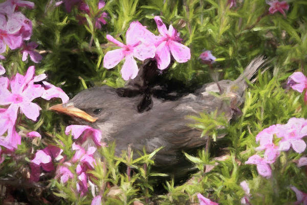 Wall Art - Photograph - Babe Out Of The Nest by Donna Kennedy