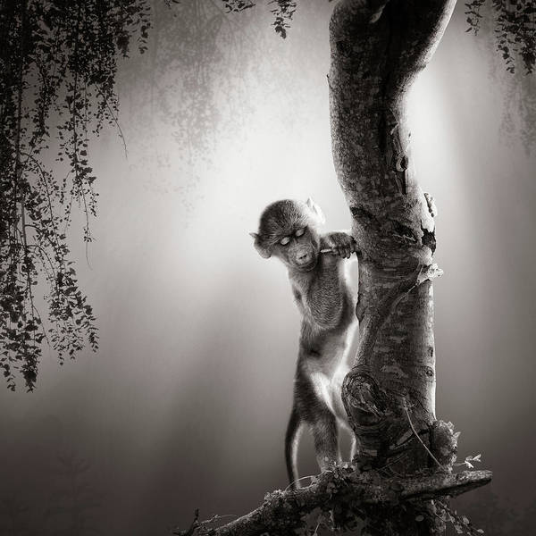 Wall Art - Photograph - Baby Baboon by Johan Swanepoel