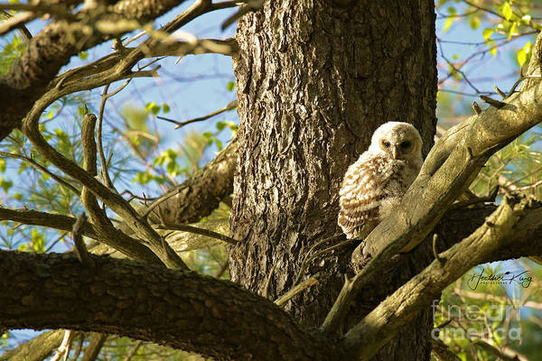 Wall Art - Photograph - Baby Barred Owl Soaking Up The Sun  by Heather King