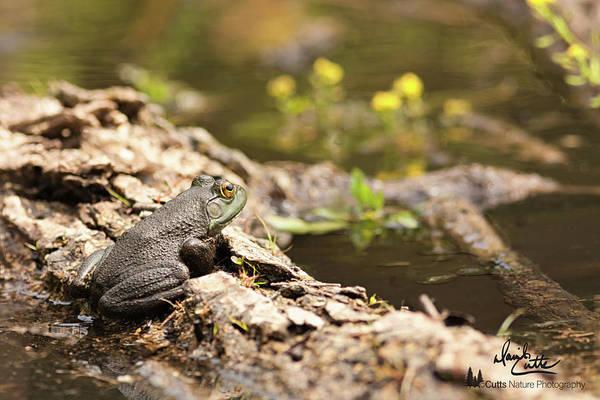 Photograph - Baby Bullfrog by David Cutts