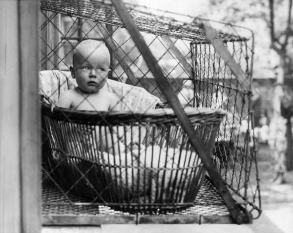 Cage Photograph - Baby Cage by N Smith