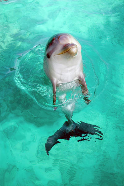 Wall Art - Photograph - Baby Dolphin by Nature/uig