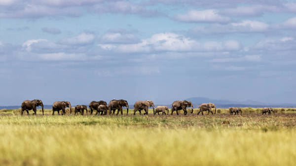 Wall Art - Photograph - Baby Elephants Leading Herd In Line In Kenya by Susan Schmitz