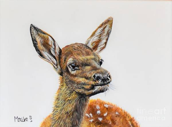 Painting - Baby Elk by Marilyn McNish