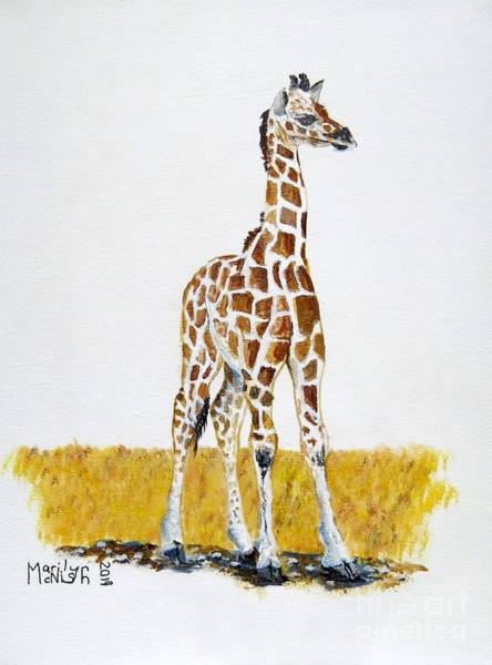 Painting - Baby Giraffe by Marilyn McNish