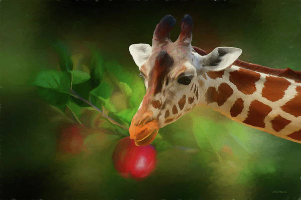 Painting - Baby Giraffe Wants The Apple - Painting by Ericamaxine Price