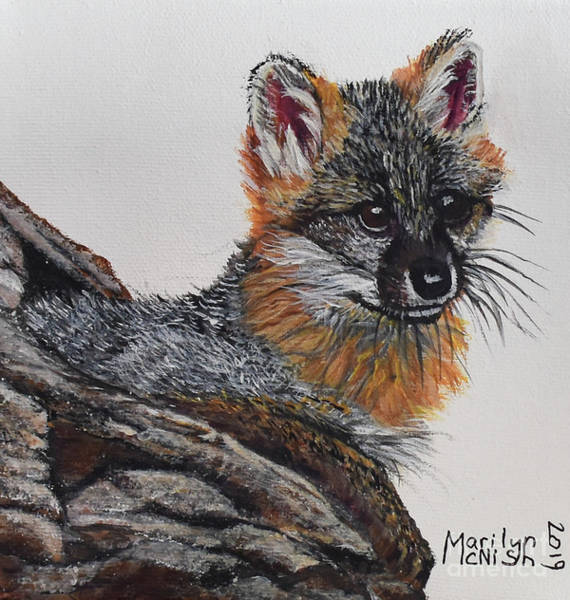 Painting - Baby Grey Fox by Marilyn McNish