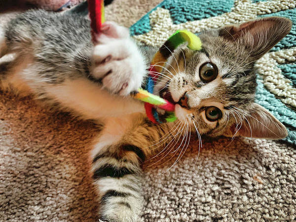 Photograph - Baby Kitten And String by Garry Gay