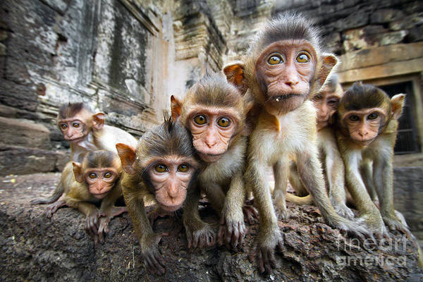 Monkey Wall Art - Photograph - Baby Monkeys Are Curious,lopburi by Jeep2499