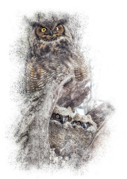 Photograph - Baby Owls Safe With Parent by Patti Deters