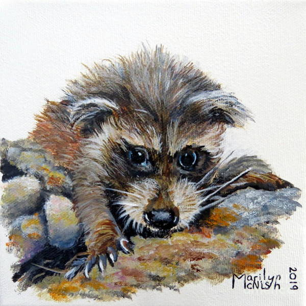 Painting - Baby Raccoon by Marilyn McNish