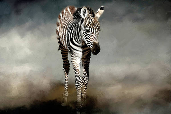 Foal Photograph - Baby Stripes by Donna Kennedy