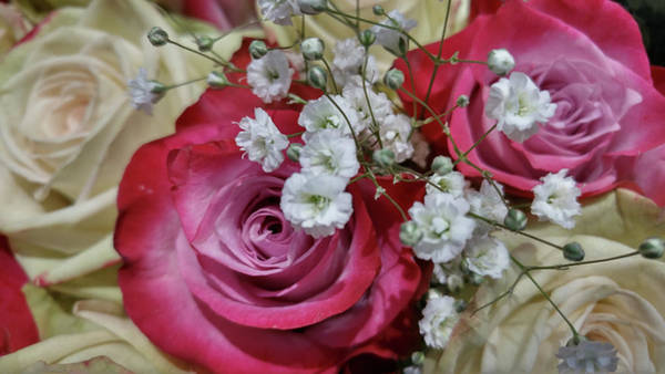 Photograph - Baby's Breath And Roses by Liza Eckardt