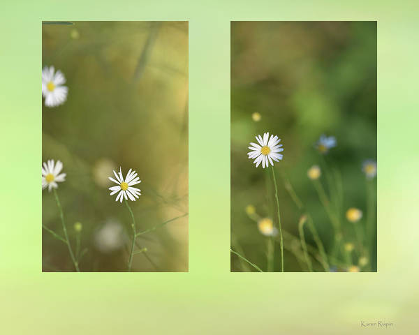 Photograph - Baby's Breath by Karen Rispin