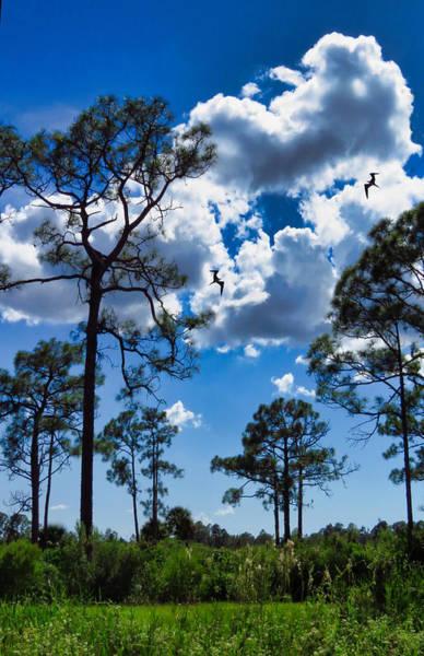 Photograph - Back Lit Sky by Rosalie Scanlon