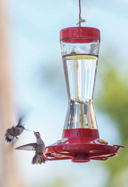 Hummingbird Feeder Photograph - Back Off, Buddy by Rebecca L. Latson