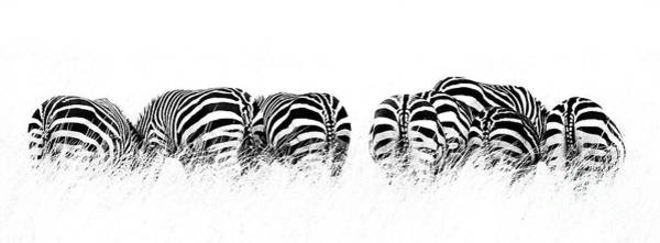 Wall Art - Photograph - Back View Of Zebras In A Row  Horizontal Banner by Jane Rix