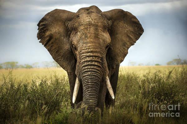 Wall Art - Photograph - Background Elephant by Lara Zanarini