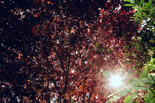 Photograph - Background Of Leaves And Branches Of Trees With Sun Glow, Muted  by Joaquin Corbalan