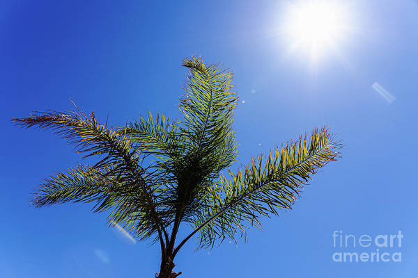Photograph - Background Of The Top Of A Palm Tree Seen From Below Against The by Joaquin Corbalan