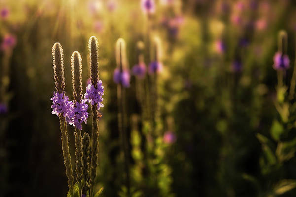 Photograph - Backlit by Scott Bean