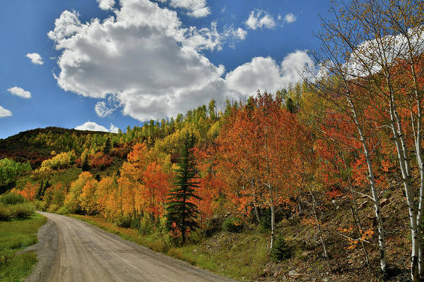 Photograph - Backroad Fall Color On Wilson Mesa by Ray Mathis