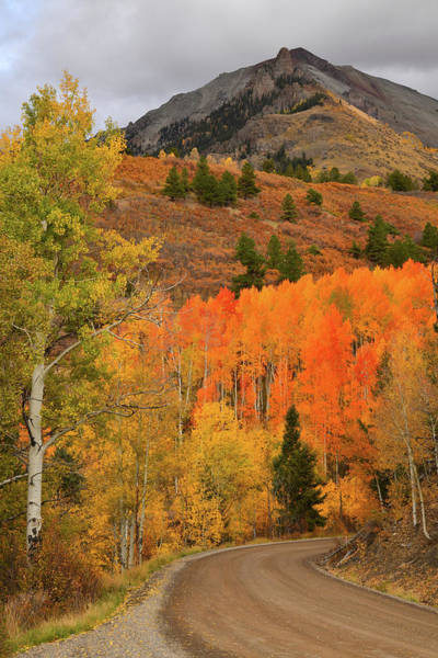Photograph - Backroad Fall Colors Near Telluride Co by Ray Mathis