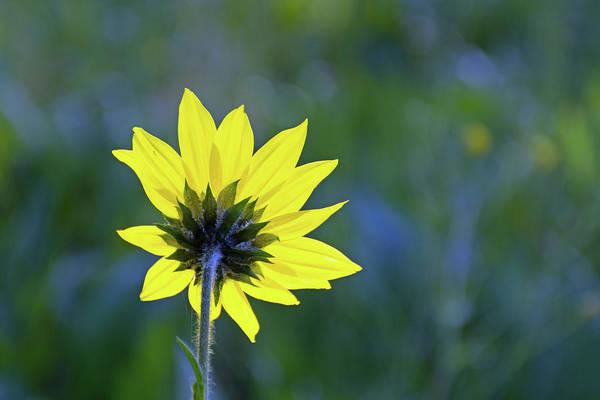 Photograph - Backward Flower by Bruce Gourley