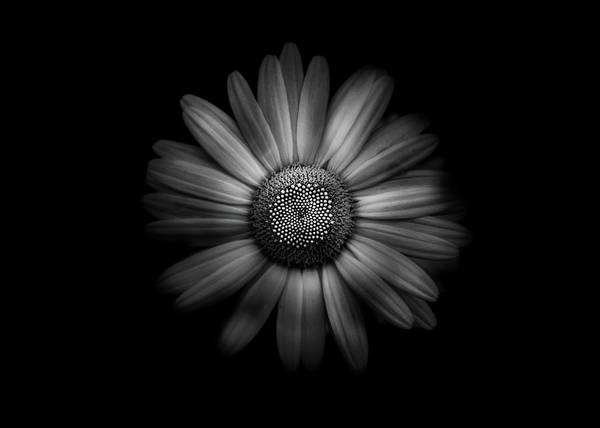 Photograph - Backyard Flowers In Black And White 31 by Brian Carson