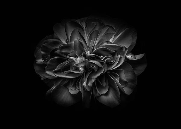 Photograph - Backyard Flowers In Black And White 67 by Brian Carson