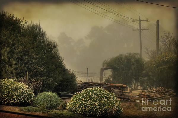 Photograph - Backyard Fog by Elaine Teague