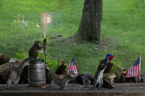 Photograph - Backyard Squirrels Enjoying Fourth Of July by Dan Friend