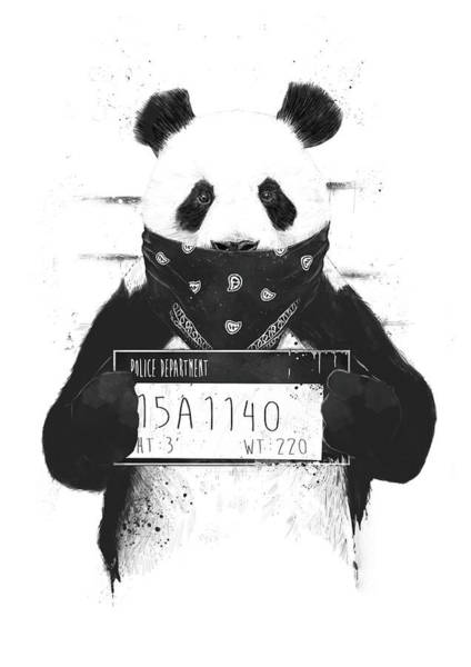 Funny Drawing - Bad Panda by Balazs Solti