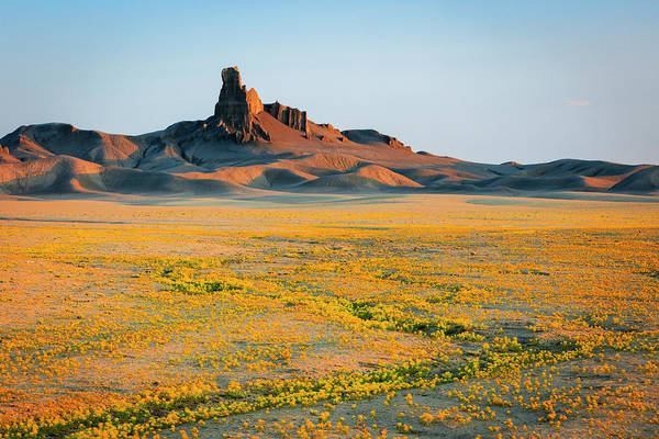 Photograph - Badlands Superbloom by Johnny Adolphson