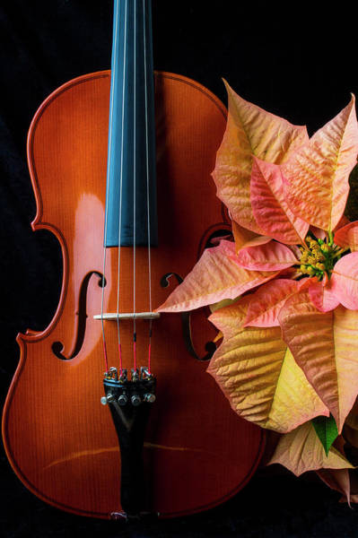 Wall Art - Photograph - Baeutiful Violin And Poinsettia by Garry Gay
