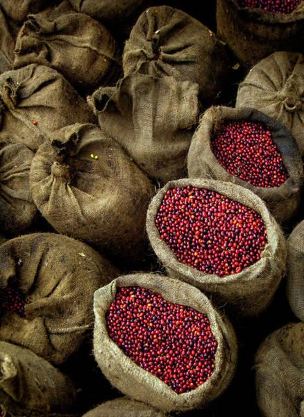 El Salvador Photograph - Bags Of Coffee Cherries, El Salvador by John Coletti