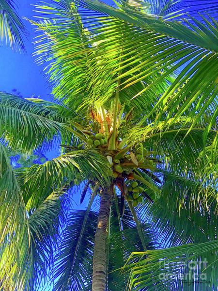 Coconut Trees Photograph - Bahama Coconut Tree by Carey Chen