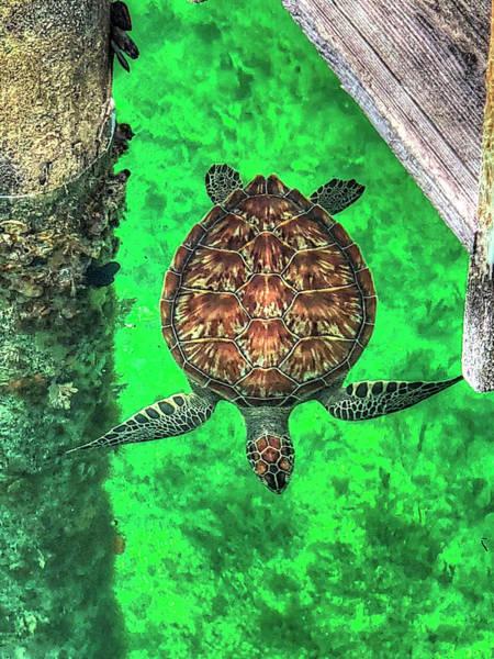 Photograph - Bahama Sea Turtle by Donna Kennedy