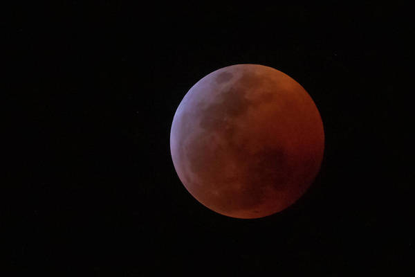 Photograph - Bahamian Super Blood Wolf Moon by Thomas Kallmeyer