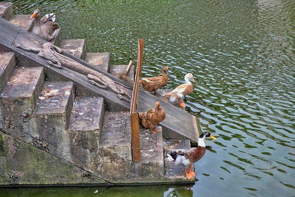 Photograph - Balancing Birds by JAMART Photography