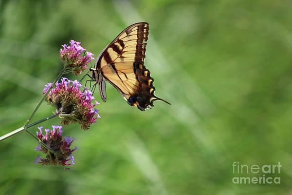 Photograph - Balancing Butterfly by Karen Adams