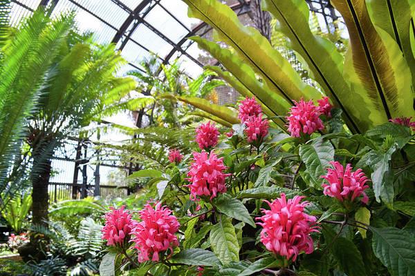 Photograph - Balboa Park Botanicals by Kyle Hanson