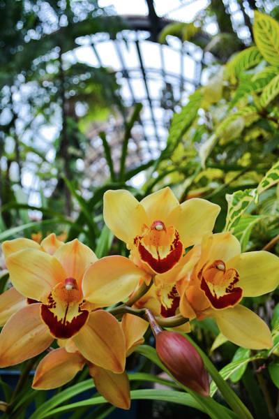Photograph - Balboa Park Orchid Portrait by Kyle Hanson