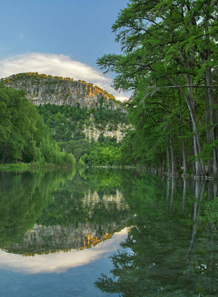 Photograph - Bald Cypress Trees Along River, Frio by Tim Fitzharris