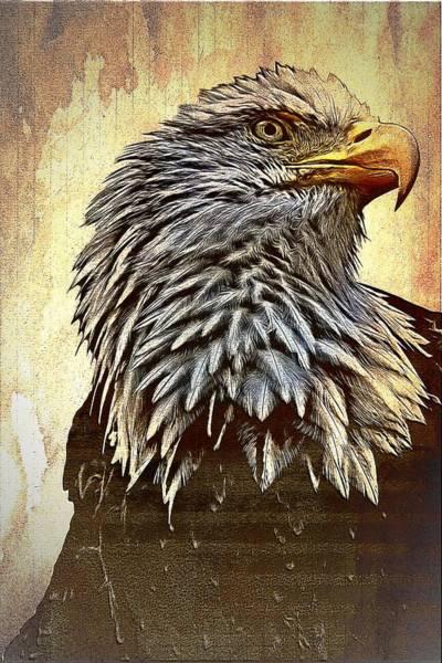 Bald Mixed Media - Bald Eagle by Aaron Berg
