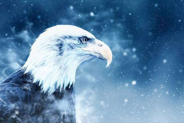 Wall Art - Painting - Bald Eagle by ArtMarketJapan