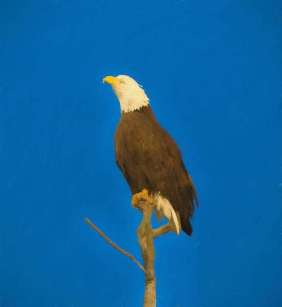 Wall Art - Painting - Bald Eagle Blue Sky by Dan Sproul