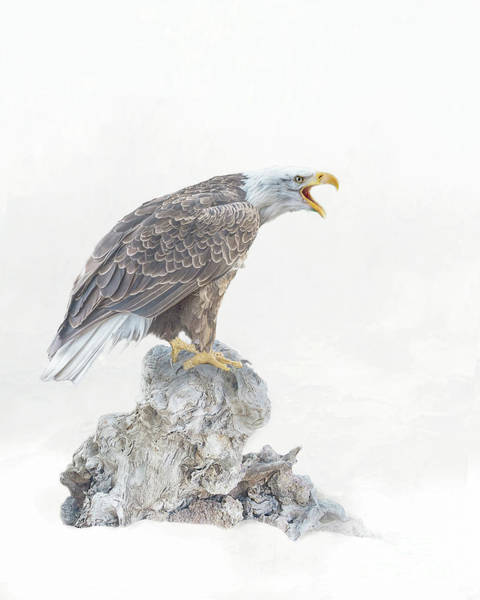 Photograph - Bald Eagle In Winter Snow by Brian Tarr
