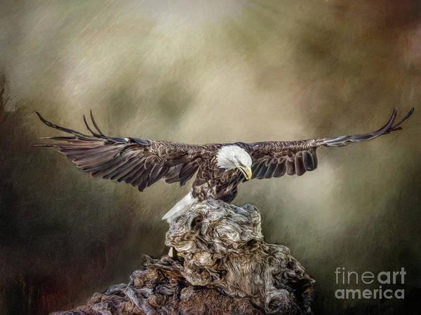 Photograph - Bald Eagle Landing by Brian Tarr