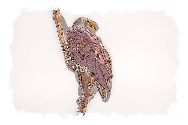 Photograph - Bald Eagle by Matthew Nelson
